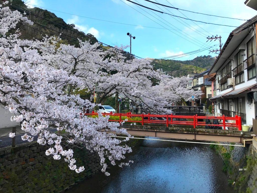 木屋町通り桜